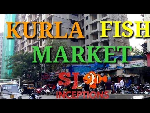 Kurla Fish Market Second Largest Aquarium Fish Market Of India