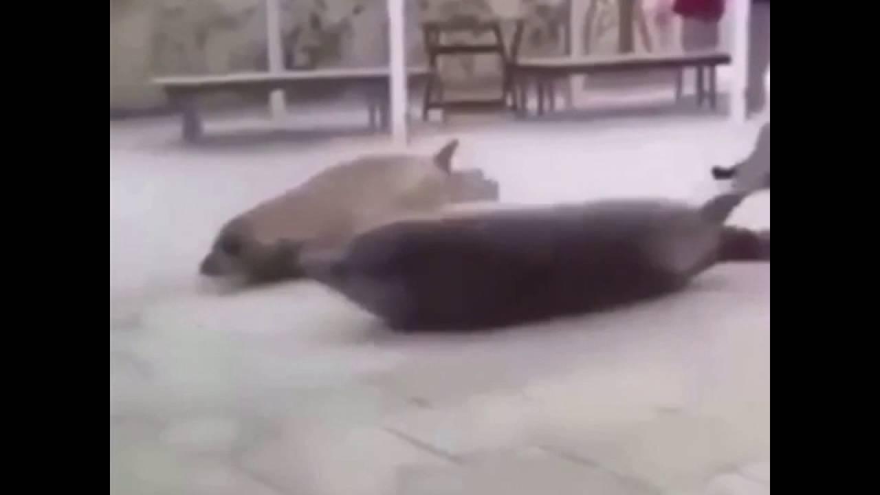 Seal Bounce?