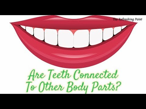 Are Your Teeth Connected Biologically to Other Body Parts? Oral Health & the Well-Being of the Body