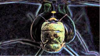 ALIEN HUMAN HYBRID SKULL TUMOR GROWS ON SWAMP MONSTER ELENIN DRAGON-MAN!!!