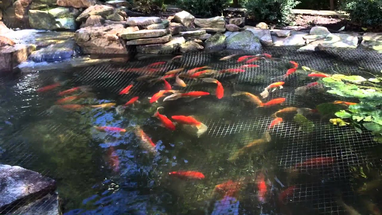 Keep leaves out of baltimore pond maryland pond for Pond maintenance companies