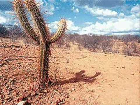 videos sobre a caatinga