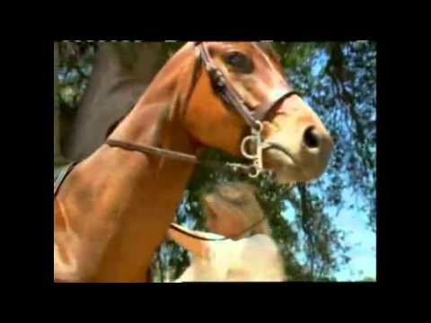 Bold and Beautiful - Brooke's Epic Horse Ride, Crashes Taylor's Wedding