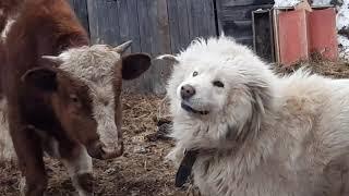 Все животные играют вместе!