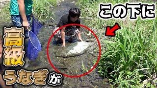 岩の中にいる高級うなぎを「素手」で捕まえる!! thumbnail