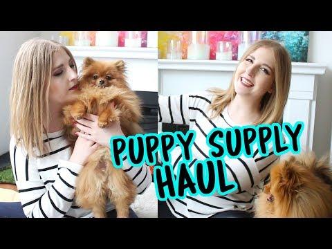 Puppy Supply Haul with Paddington, my Pomeranian! | New Puppy Supplies
