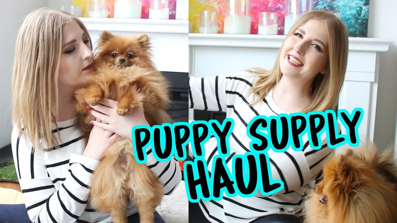 Puppy Supply Haul With Paddington My Pomeranian New Puppy