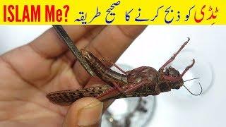Why Eat Locusts (Tiddi , Maĸdi , Jirad) Cricket Recipes   Amazing Food