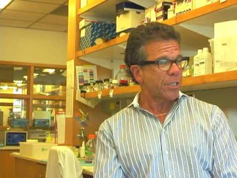 UW Insight: The H1N1 Flu - Dr. Michael Katze, Washington National Primate Research Center