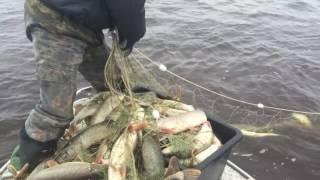 Рыбалка на Иртыше 2015