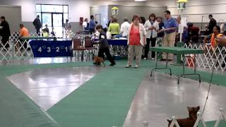 Crown Point Dog Show 2014  Indiana