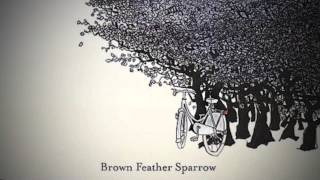 Watch Brown Feather Sparrow We Have To Run video