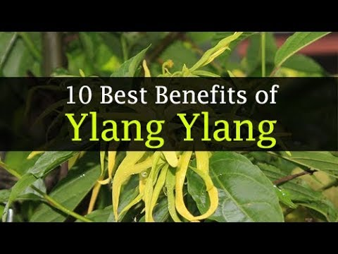 ylang-ylang-essential-oil-benefits-for-hair,-face,-skin