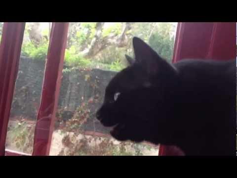 Mon chat fait des bruits chelou...