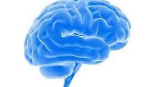 13 Incredible Facts About The Brain Mp3