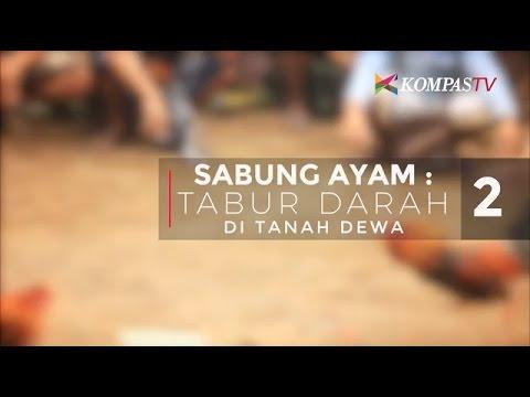 Gaffer Cantik dari Filipina - ayamJAGO.online from YouTube · Duration:  1 minutes 4 seconds