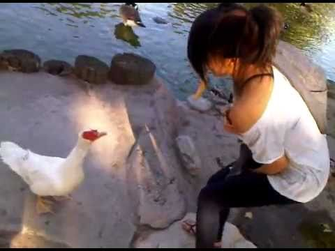 duck asian girl personals Xvideos asian-girl-sucking-cock videos, free xvideoscom - the best free porn videos on internet, 100% free.