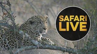 safariLIVE  - Sunrise Safari - July 12, 2018