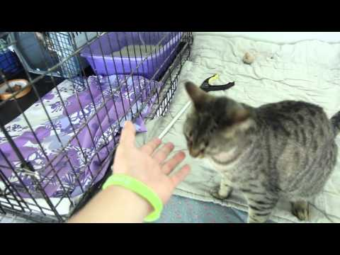 North Toronto Cat Rescue (Volunteer Week) - Erick