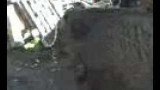 struga-diva svinja-lov-rzanovo-makedonija-hunt wild boar