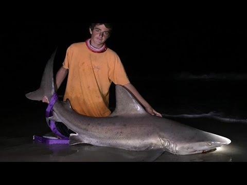 Shark Fishing With A Googan And Catching Sandbar And Tiger Sharks! - LBSF NC