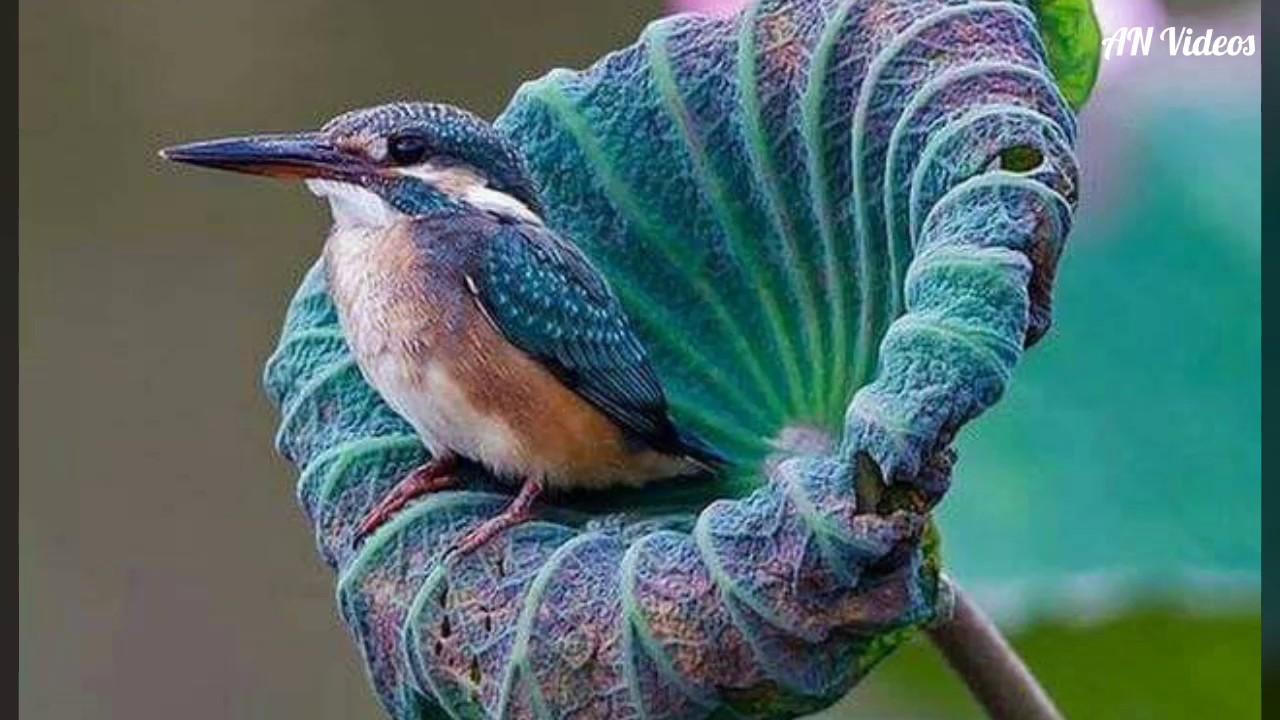 Bird Pictures Amazing Birds: Most Beautiful Birds