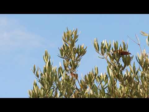 Zo verzorg je de Pannenkoekplant/Pilea peperomioides from YouTube · Duration:  6 minutes 16 seconds