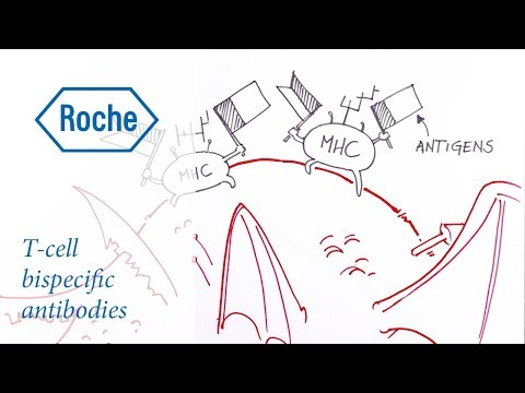 Drawn to Science: T-cell bispecific antibodies