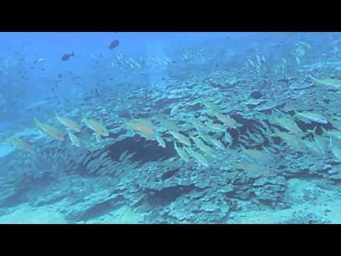 What it's like aboard Atlantis Submarines Maui
