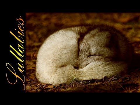 Lullaby ★ 28 Beautiful Melodies ★ with photos of sleeping pets and wild animals! ♥ Full HD, 1080p