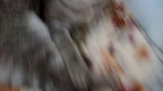 Обзор на мою кошку маркизу