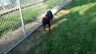 Roxie (adopted)  - Humane Society Of Central Illinois