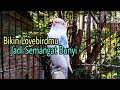 Lovebird Ngetik Ngekek Seketika Lovebird Yang Mendengar Langsung Emosi Iku Ngekek  Mp3 - Mp4 Download
