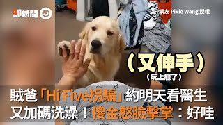 賊爸Hi Five拐騙明天看醫生 加碼洗澡!傻金憨臉擊掌:好哇|寵物|黃金獵犬|狗狗
