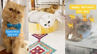 It's National Cat Day: Celebrate With These Funny Video