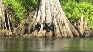 Wakulla River Florida Jungle River Cruise Boat Ride