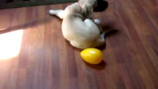 Huey plays with the Egg -12 weeks