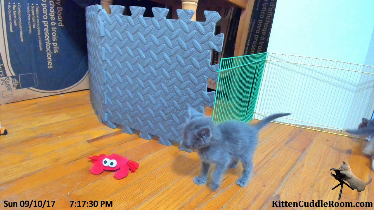 Sarah's Kitten Cuddle Room