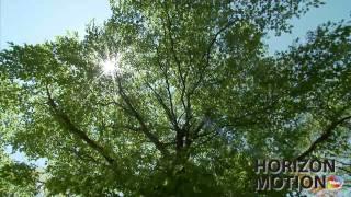 FULL HD 1080P MUSIC VIDEO 美的因 日本 樹 樹林 陽光 樹葉 aq0000638