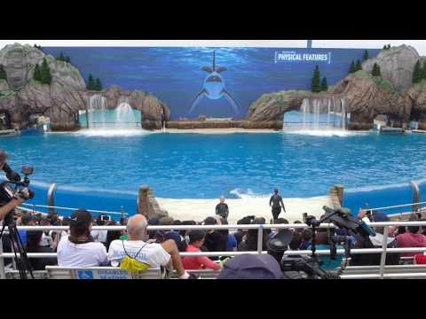 'ORCA Encounter' New Educational Killer Whale Experience at SeaWorld San Diego
