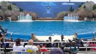 'ORCA Encounter' New Educational Killer Whale Experience at SeaWorld San Diego
