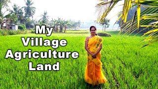 எங்கள் கிராம விவசாய நிலம் & பசுமையான இயற்கை கொஞ்சும் அழகு l My Village Beautiful Agricultural Land