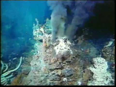 Scientists Find Previously Unknown Sea Creatures