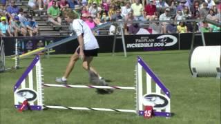 2014 Idc National Championships - Small Dog Agility