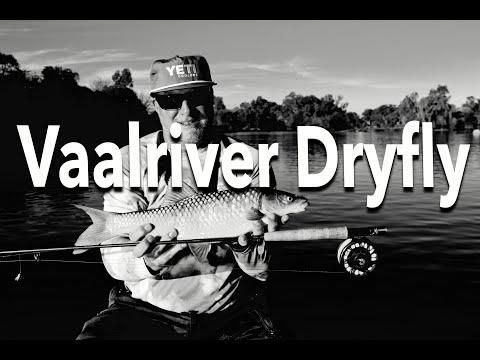 Vaal River Nymphing Yellow Fish Flyfishing