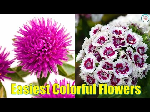 11 Easiest colorful Flowers To Grow In Pot today!