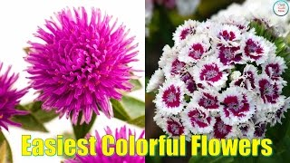 11 Easiest colorful Flowers To Grow In Pot today! Want to grow colorful blooms ? Here are 11 Easiest flowers Flowers for the