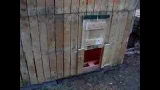 """""""free Pallet"""" Hen House Chicken Coop Pt 2"""