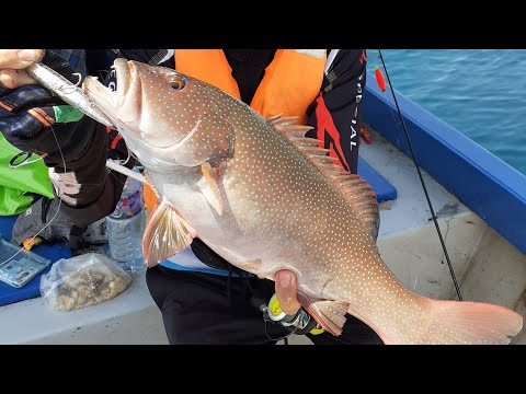 Popping And Hard Lure Trip No.3 (Coral Trouts, Trevallies, Green Jobfish & Emperors)