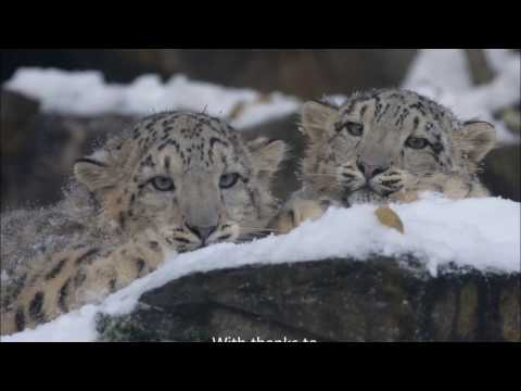 Protecting Snow Leopards in Mongolia